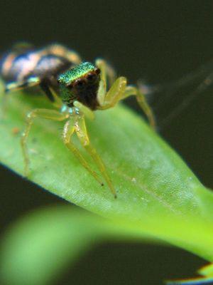small tiny spider