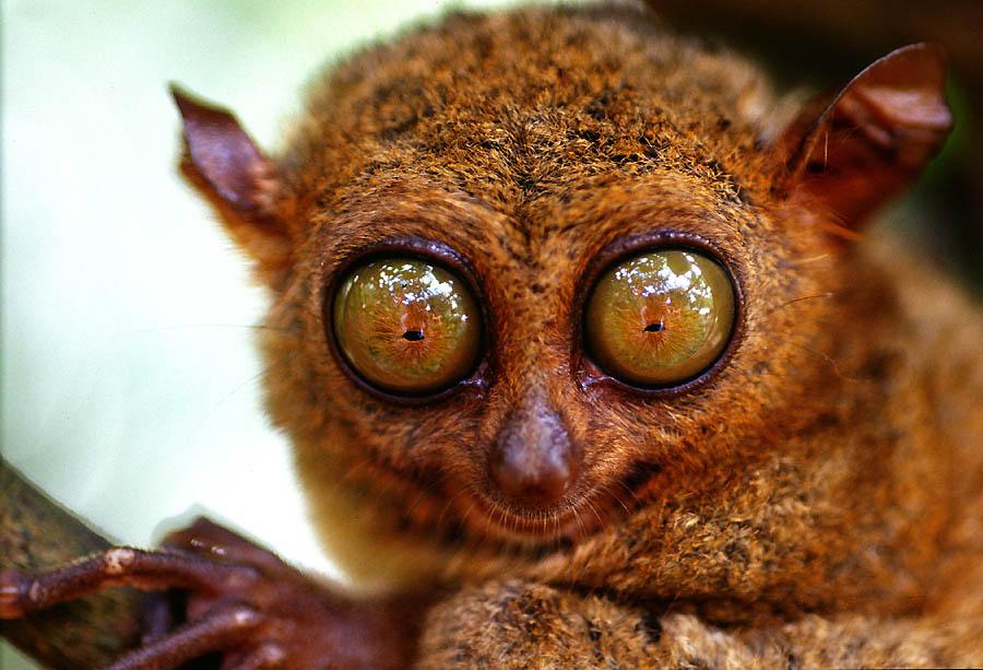 Augen Tiere