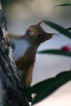 Smiley l'écureuil