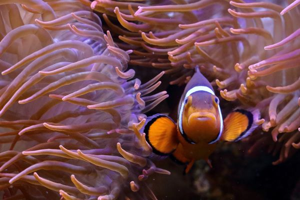 Smiling Nemo