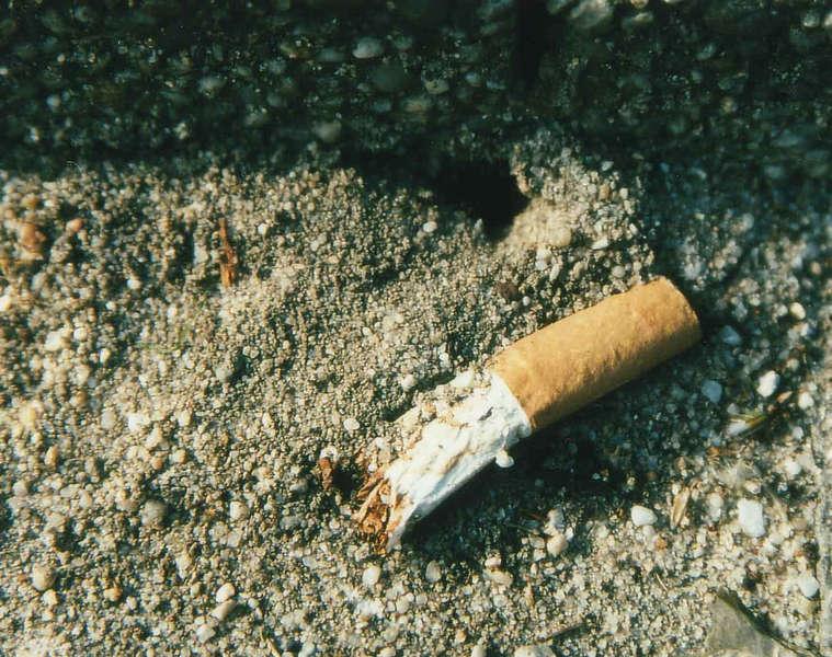 smoking ants