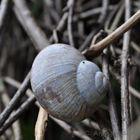 snail II
