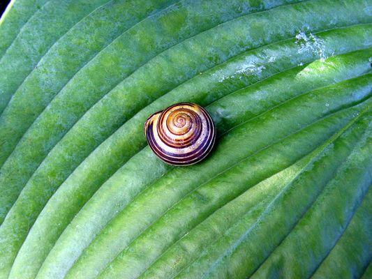 Snail in the Hamburg Botanical Garden