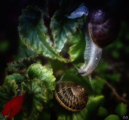 Snail Love...