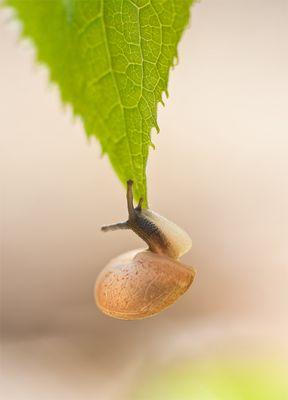 snailakrobat