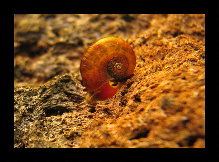 snailin' downhill