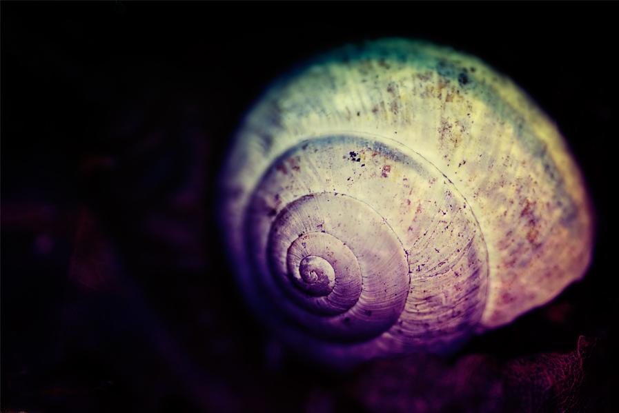snailme
