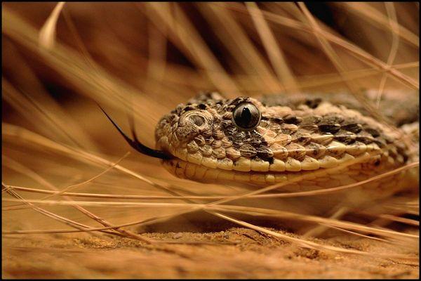 *snake*