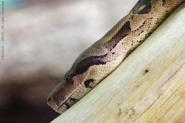 ...Snake...