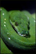 snake eye...