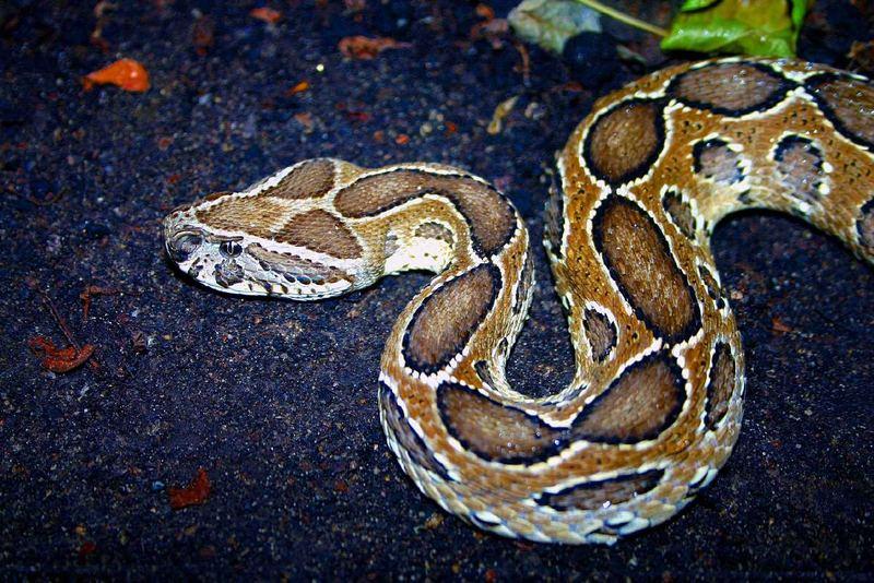 Snake in L.E.