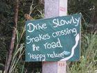 Snakes Crossing