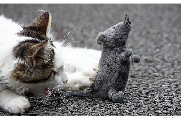snoopy der mäuseschreck ;-)