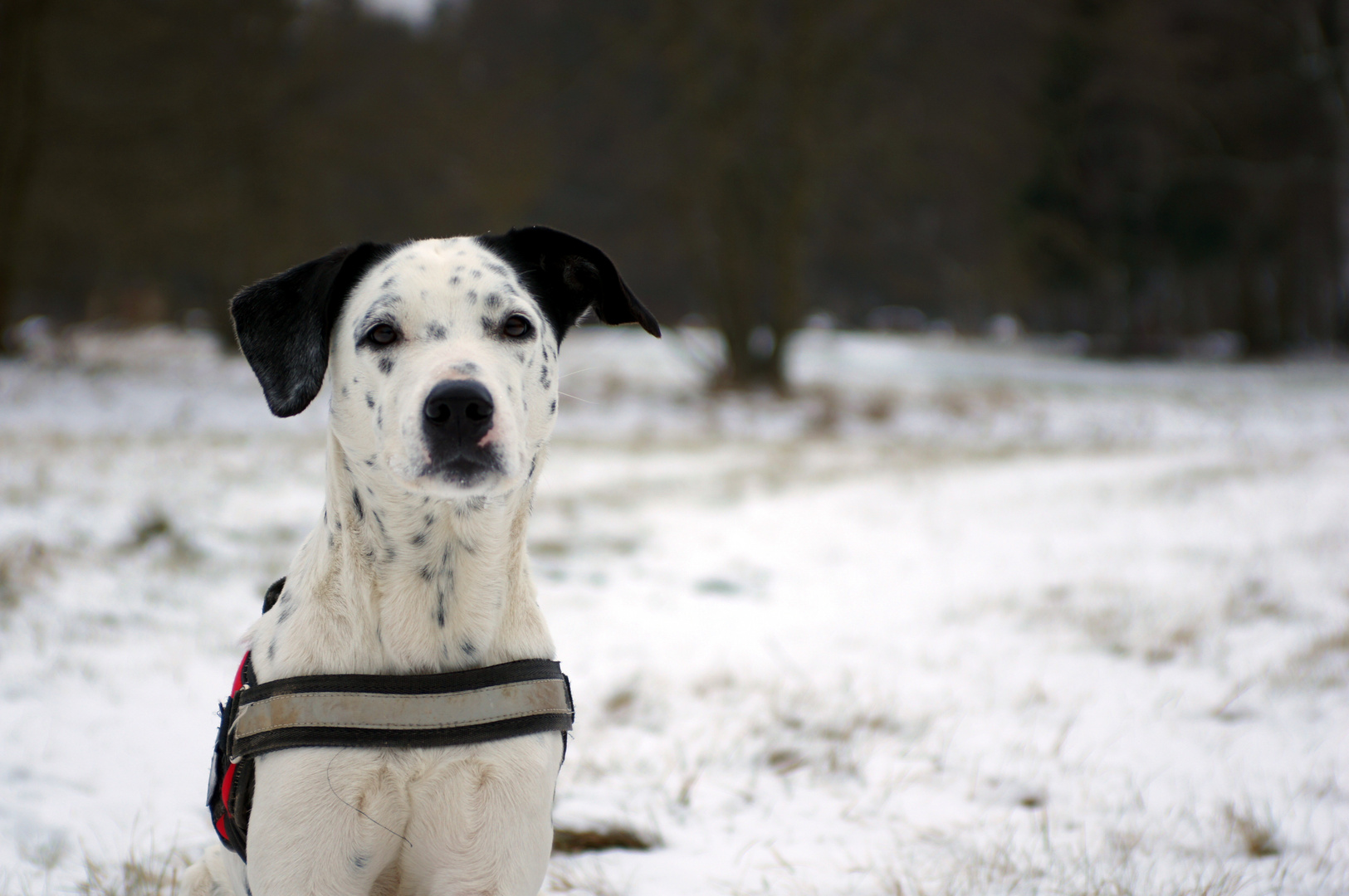 Snoopy im Schnee
