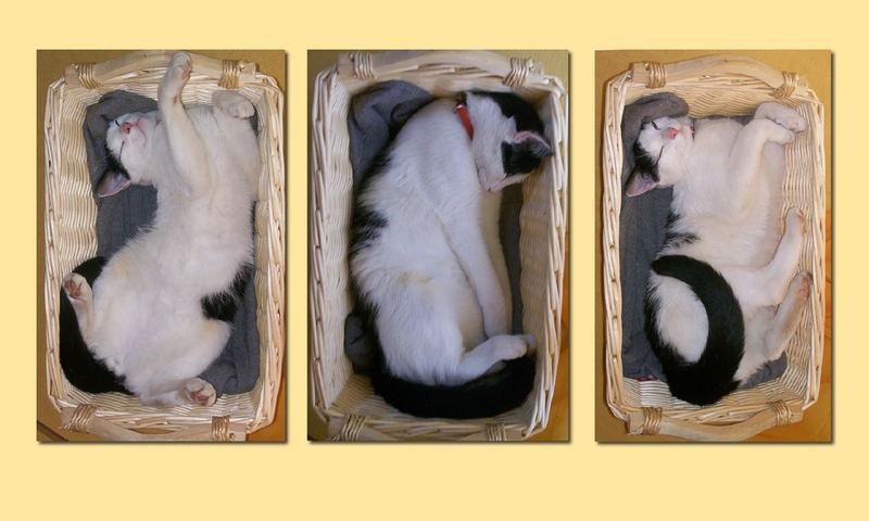 Snoopys Schlafphasen