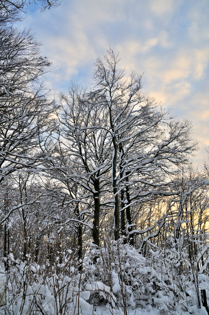 Snow Baum