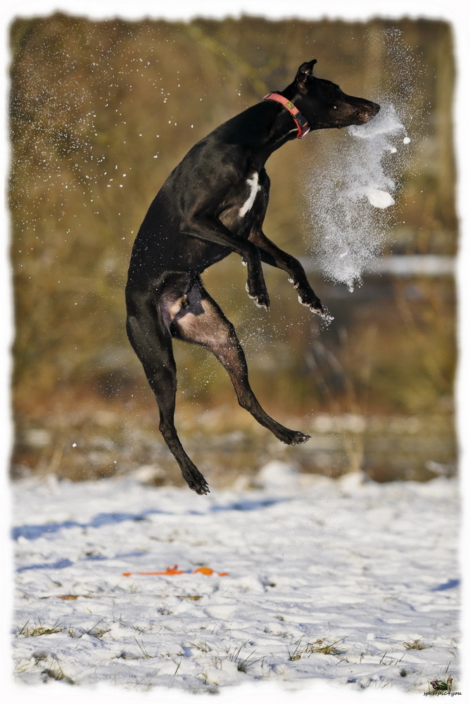 Snow Catcher... Part3
