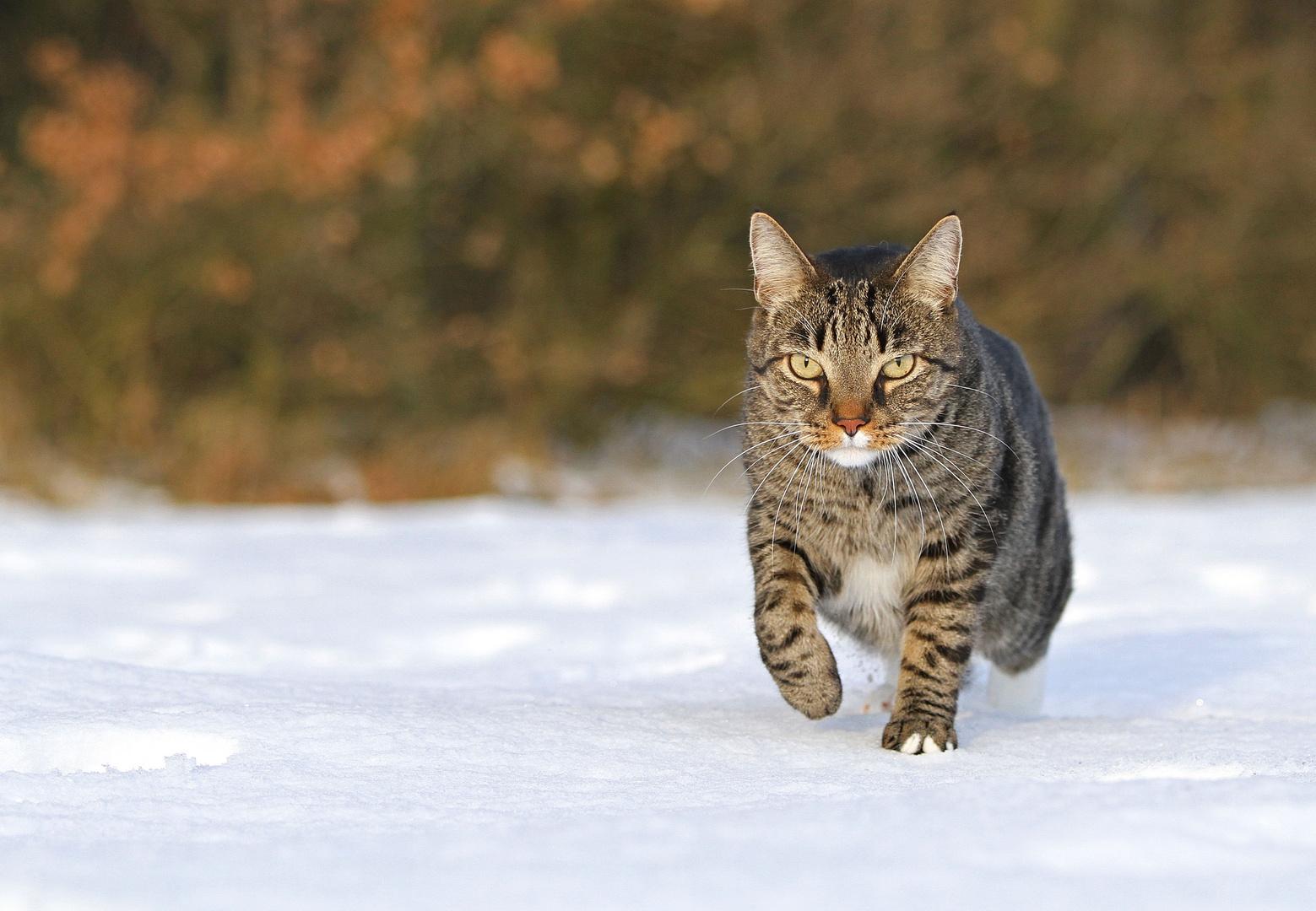 * Snow-Catwalk *