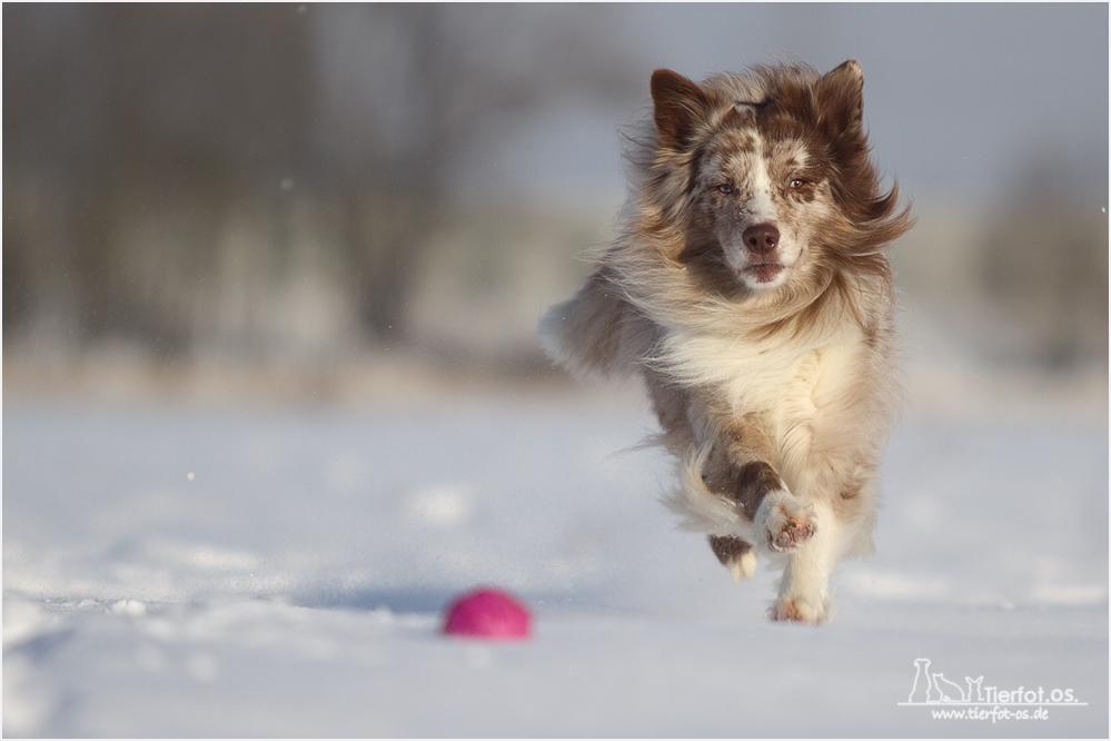 Snow Dancer...