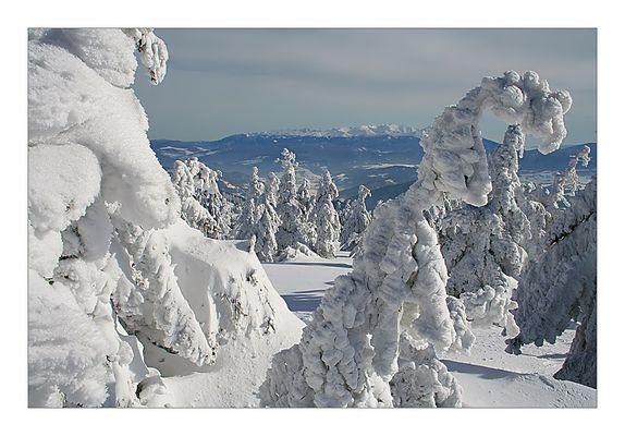 snow dressed trees