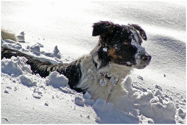 Snow-drop
