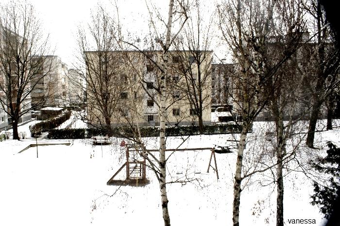 snow *___*