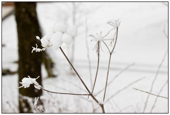 Snow II