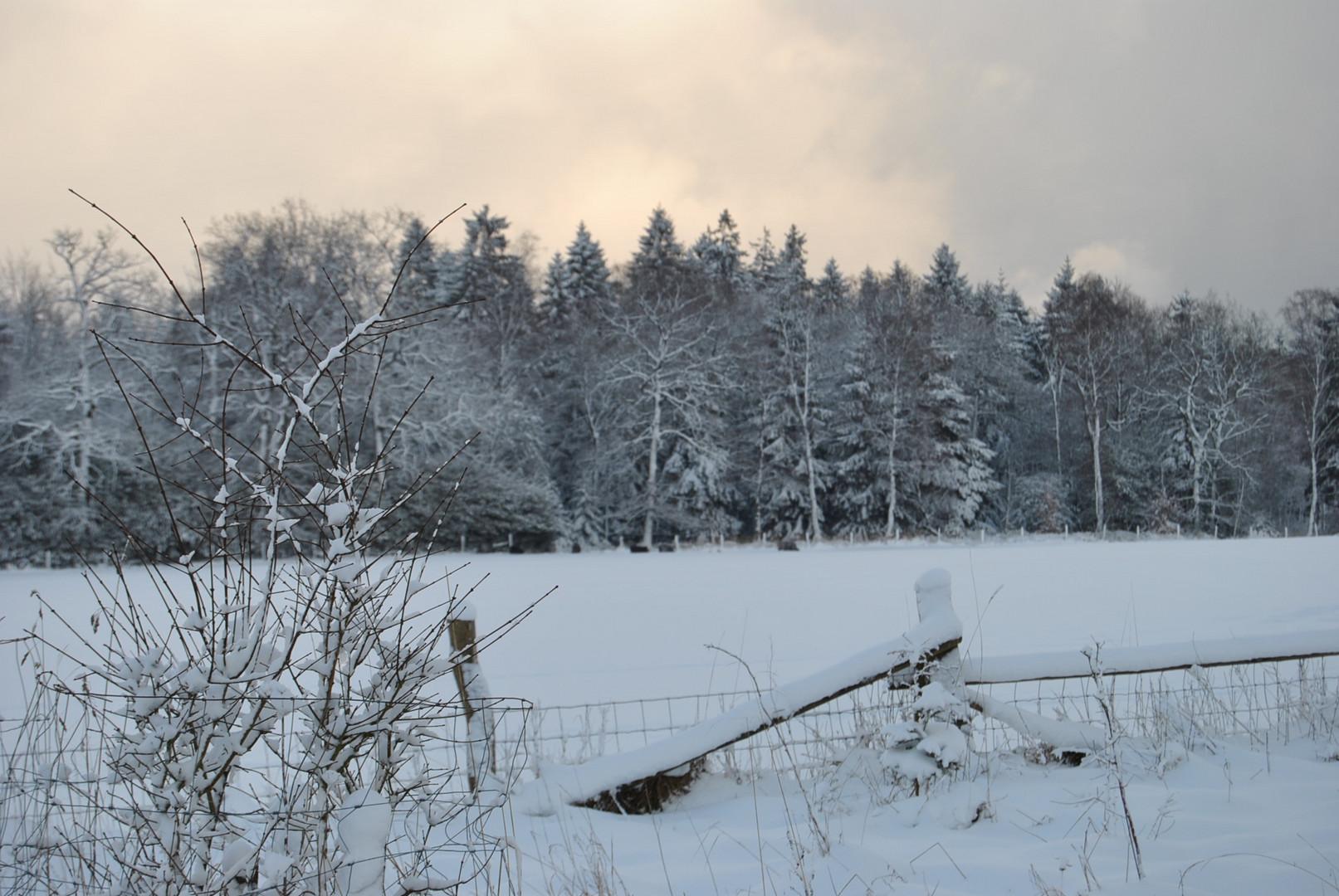 Snow-Neige-Schnee