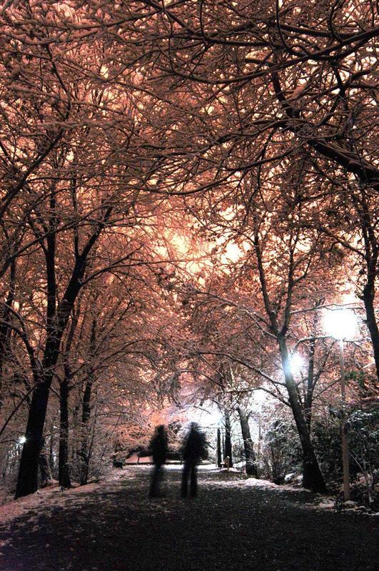 Snow night talking