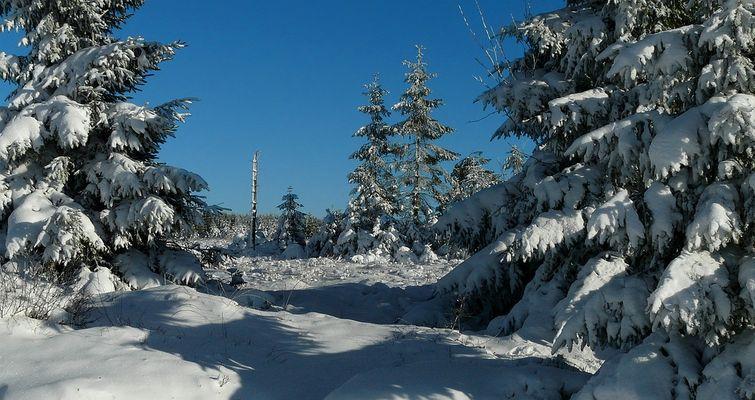 Snow paradise (2)