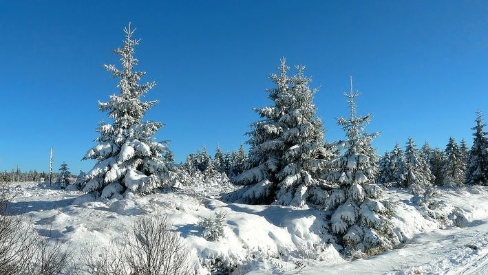 Snow paradise (6)