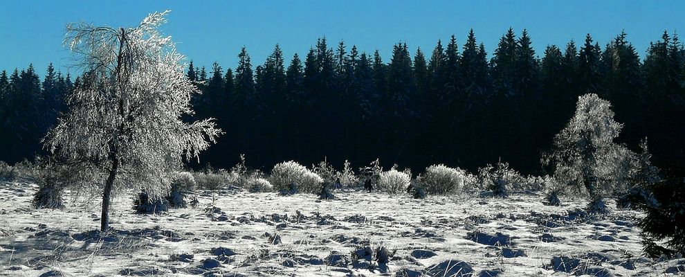 Snow paradise (8)