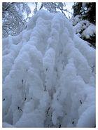 snow relief
