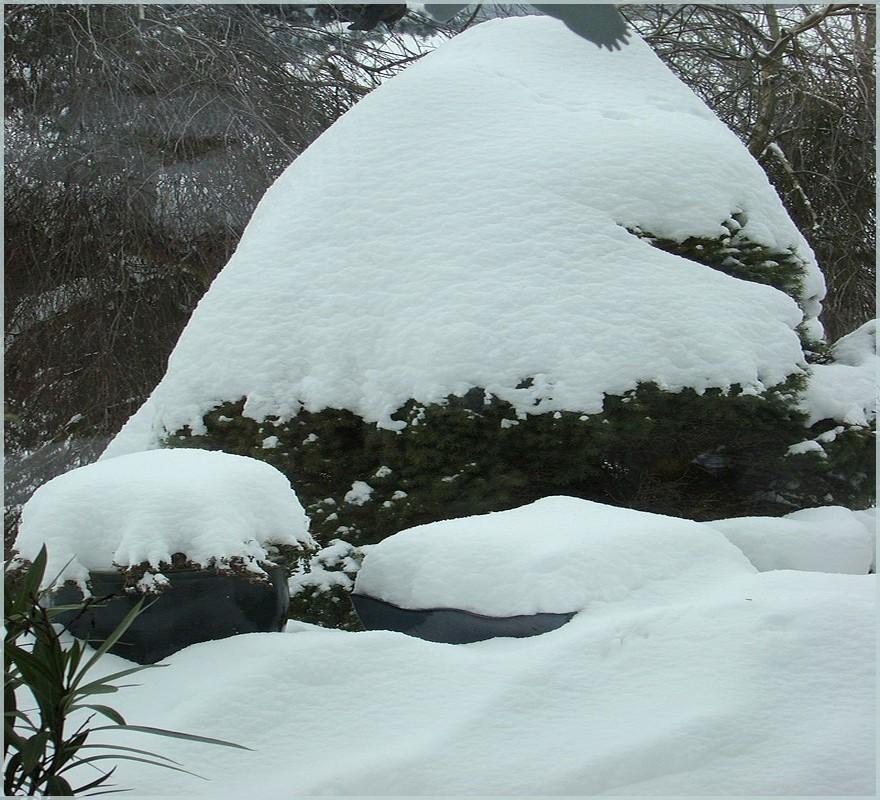 ~ Snow Snow ~