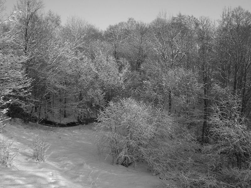 Snow (Venta)