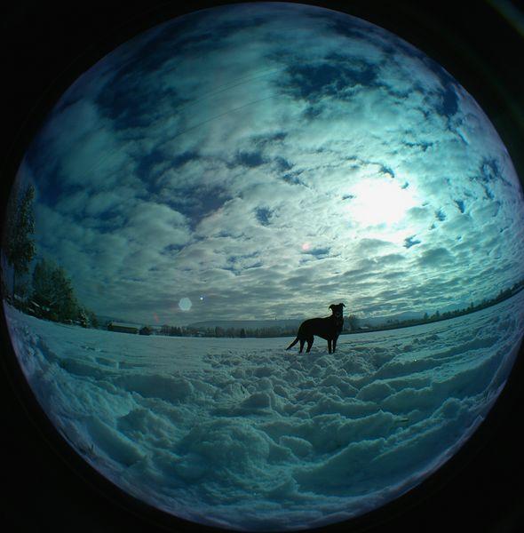 -SNOWdog-