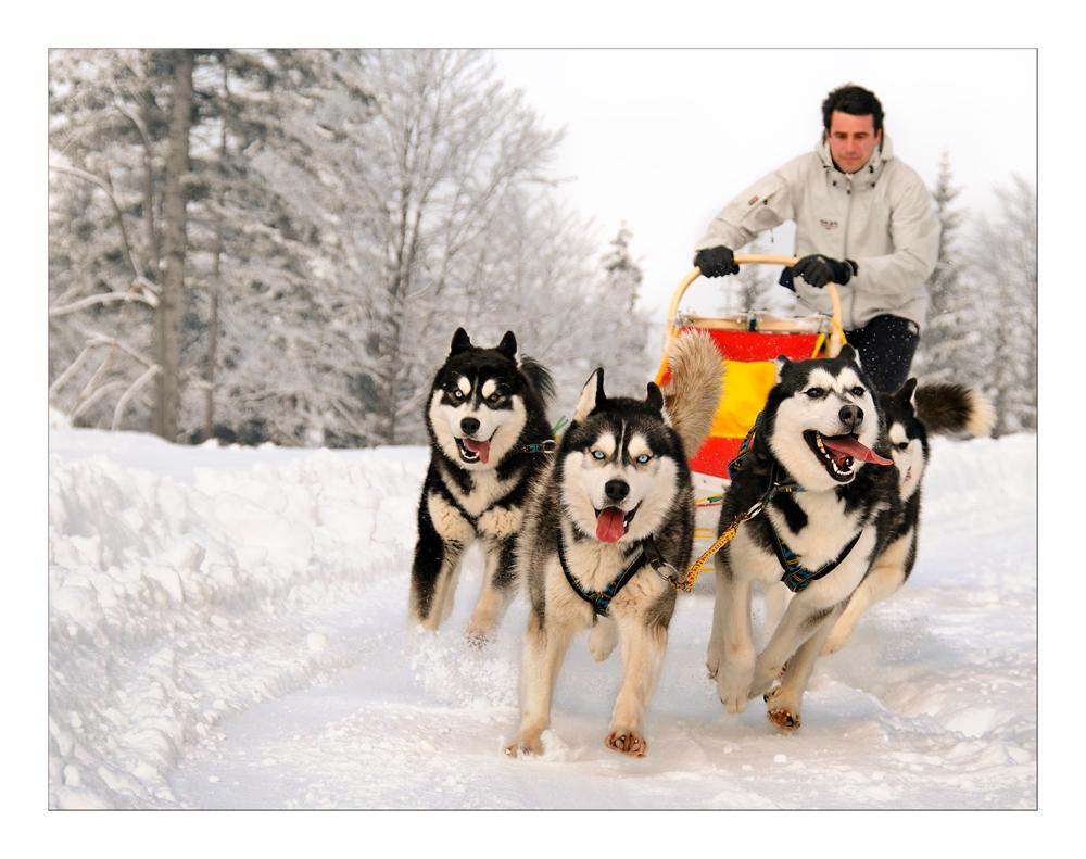 Snowdogs II
