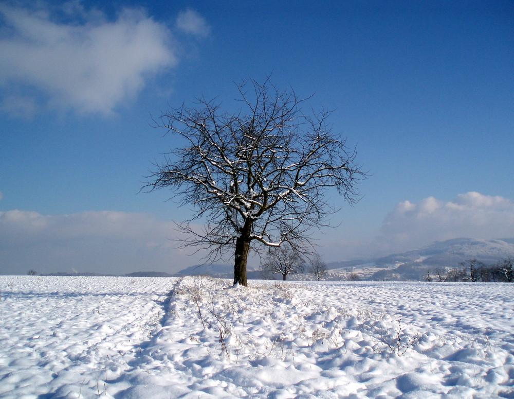 snowdream 3