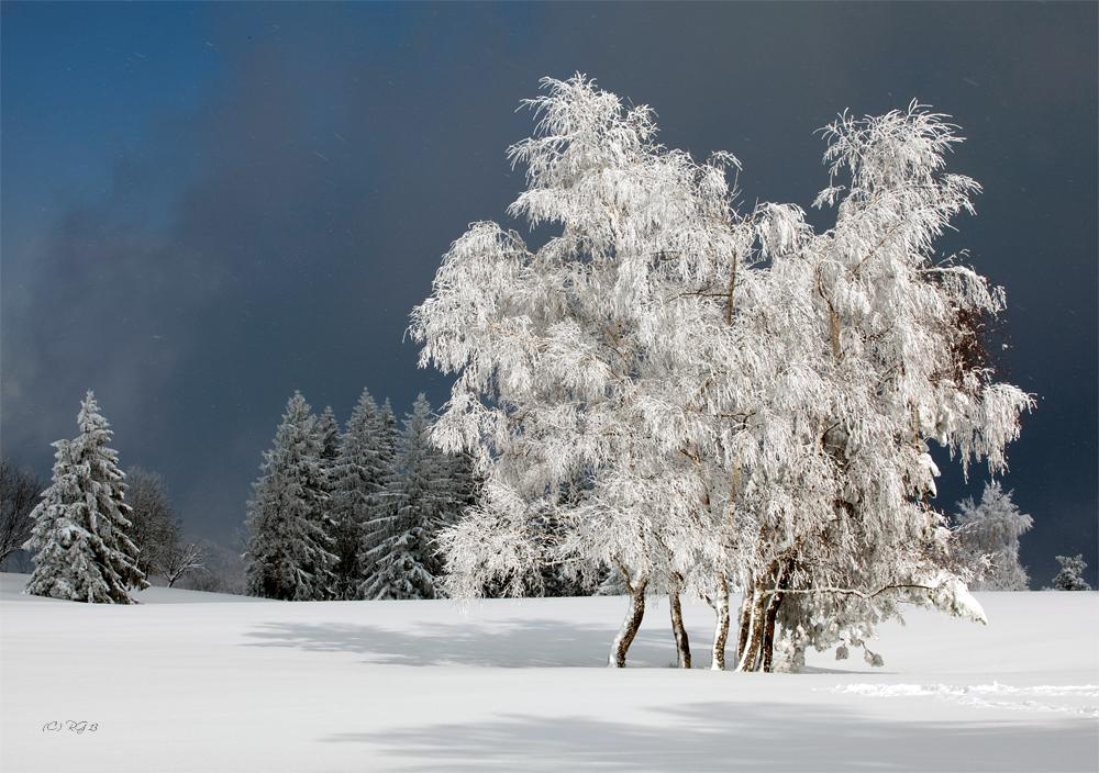 snowdreams