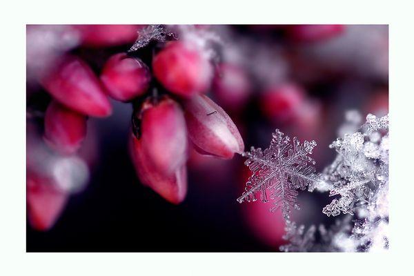 * snowflake *