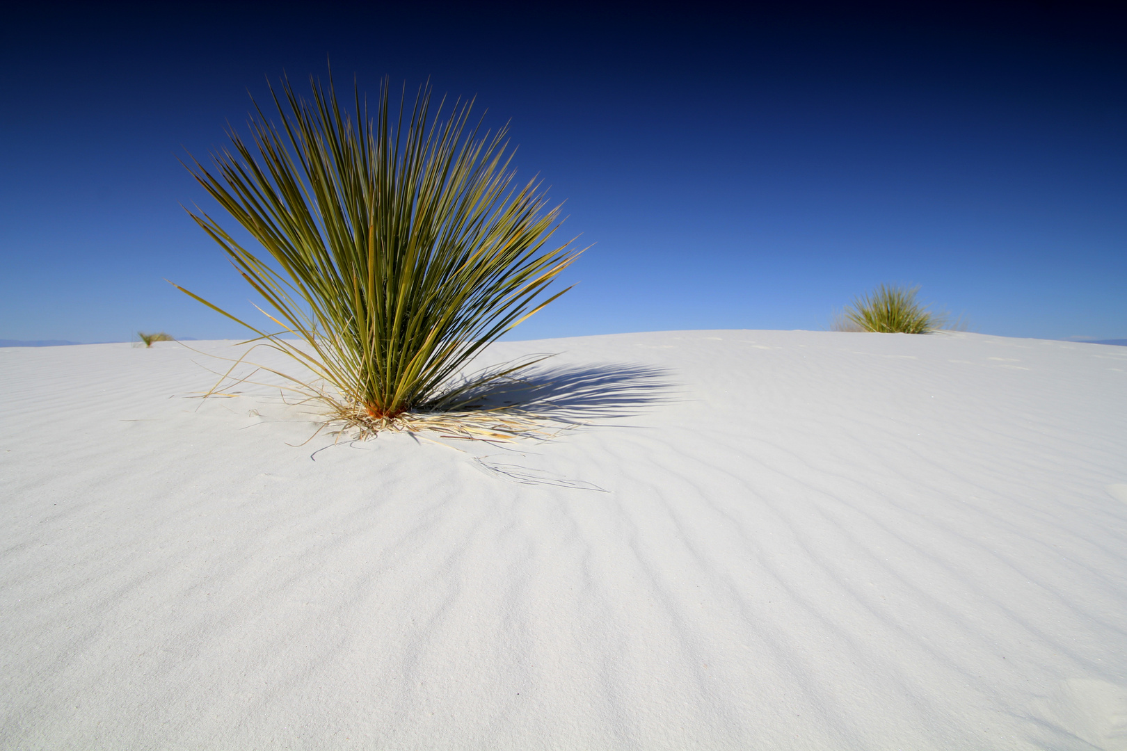 Snowhite Sands