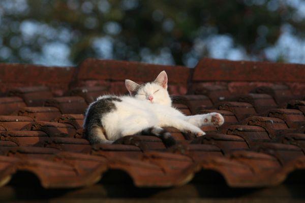 ...so bissl die warme Abendsonne genießen...