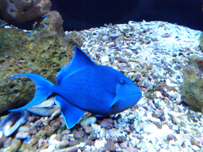 so blau trotz klarem Wasser
