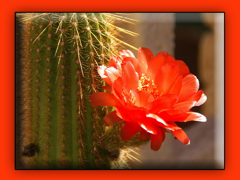So blüht's am Rande der Namib