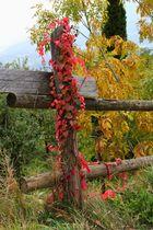 So bunt machts nur der Herbst