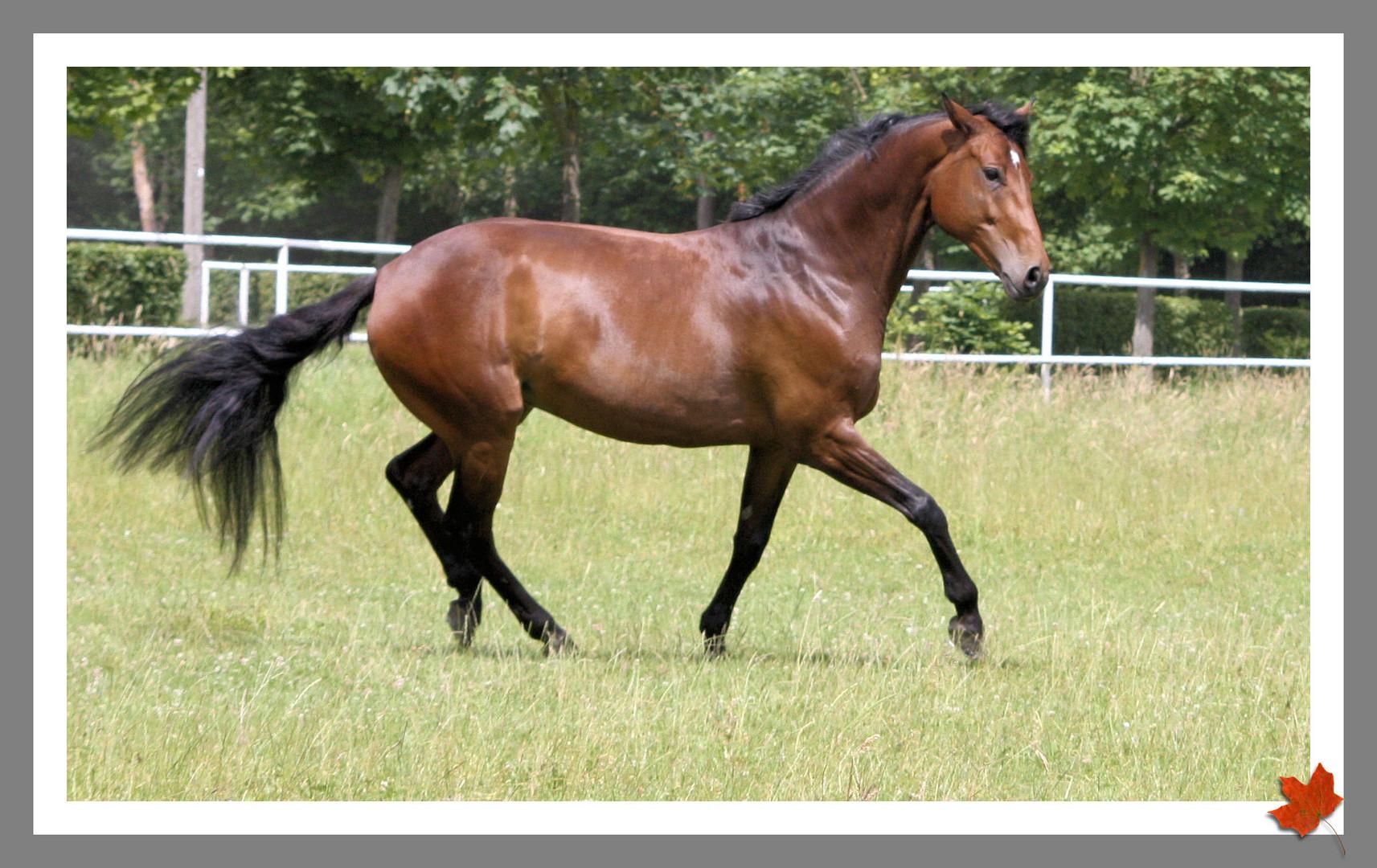 ... so dreht / trägt das Pferd der Zukunft den Schweif :-)