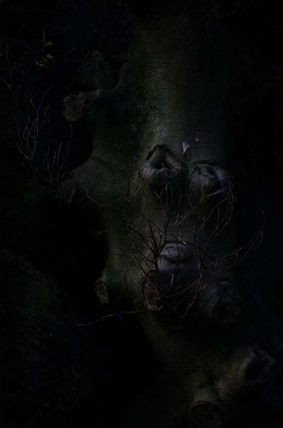 so düster der Wald..