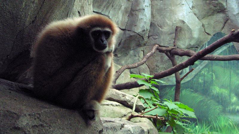 So ein Affe...