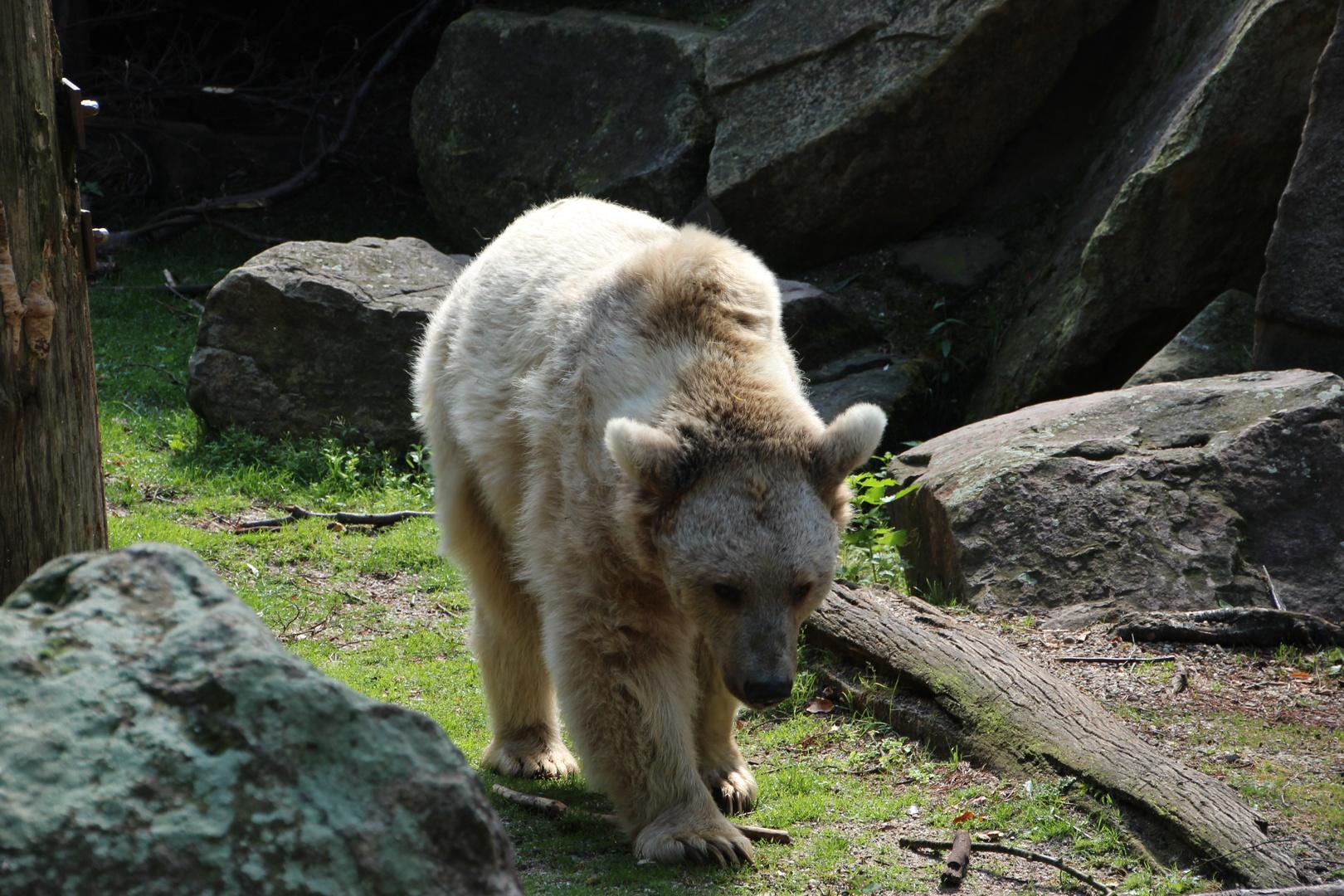 So ein Bärenleben ist anstrengend