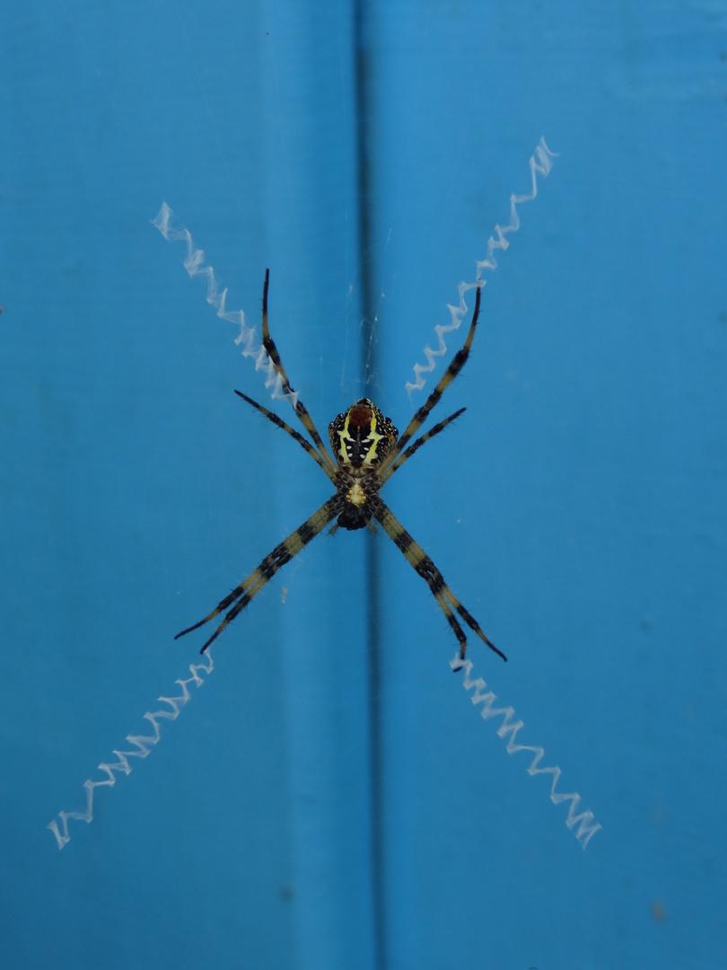 So ein Netz kann wohl nur eine ungestresste laotische Spinne spinnen!